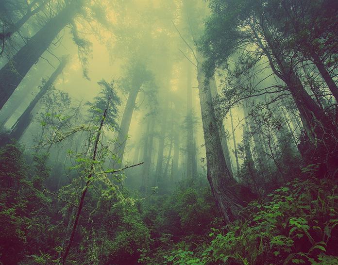 Légendaires forêts