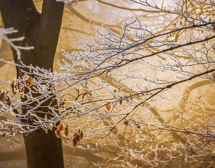 Musiques d'hiver